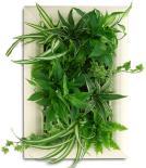 Journée plantes intérieures Feng Shui au MAGASIN VERT de RENNES Betton avec Isabelle GILLET